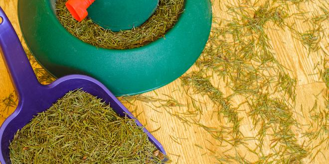 Pine needles on the floor next to a christmas tree stand